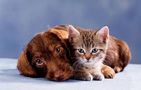 cat&dog#2